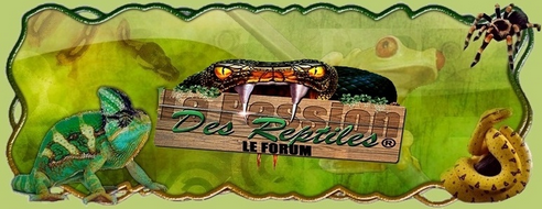Forum - La passion des reptiles